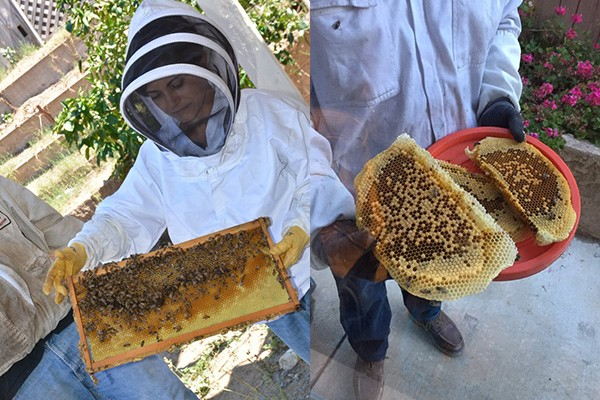 Honey Bee Hive Removal Services